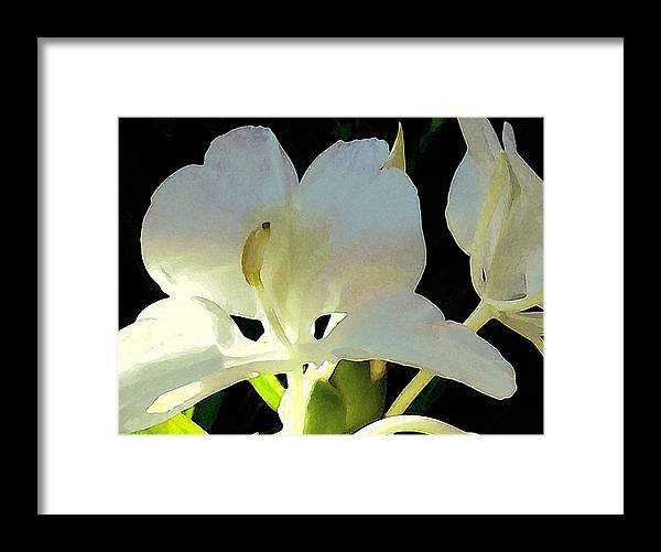 Ginger Framed Print featuring the photograph Fragrant White Ginger by James Temple