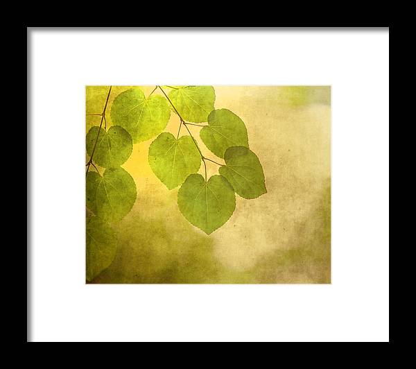 Leaves Framed Print featuring the photograph Framed In Light by Rebecca Cozart