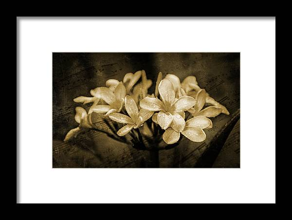 Frangipani Framed Print featuring the photograph Frangipani In Sepia by Keith Hawley