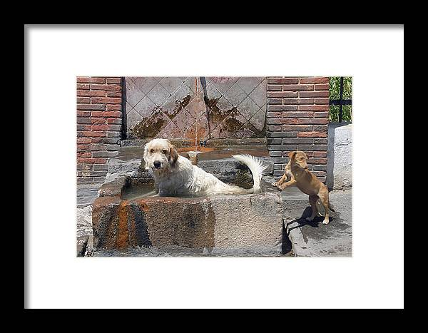 Photographer Framed Print featuring the photograph Frank And Chum by Jez C Self