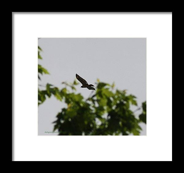 Red Tail Framed Print featuring the photograph Free Form by KatagramStudios Photography
