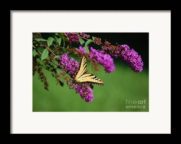 Butterfly Framed Print featuring the photograph Freedom by Debbi Granruth