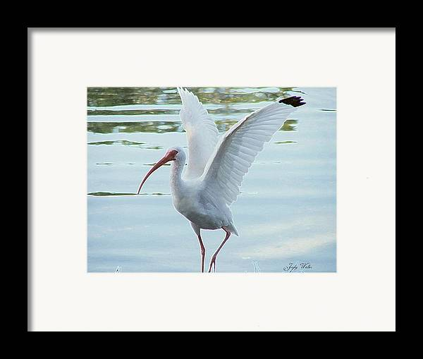 Wings Framed Print featuring the photograph Freedom by Judy Waller