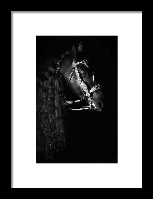Friesians Framed Print featuring the photograph Freisian Shadow by Athena Mckinzie