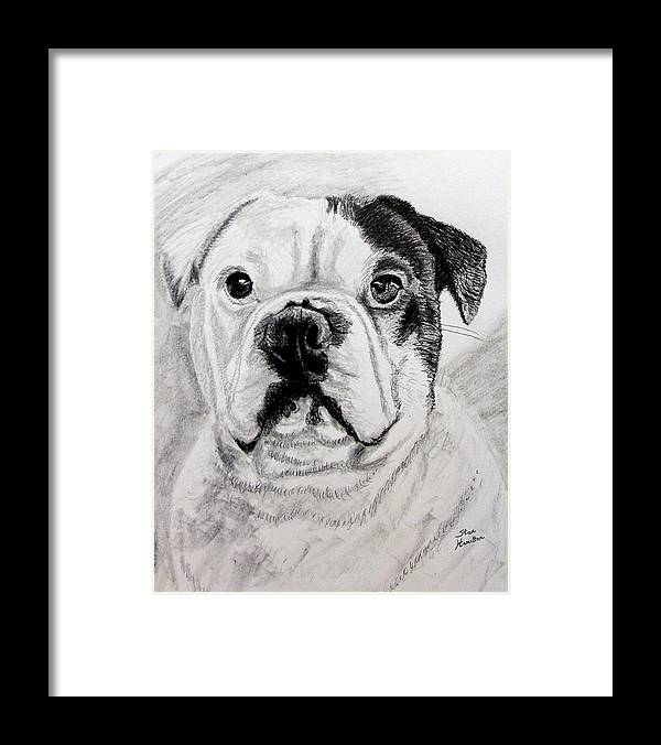 French Framed Print featuring the drawing French Bull Dog by Stan Hamilton