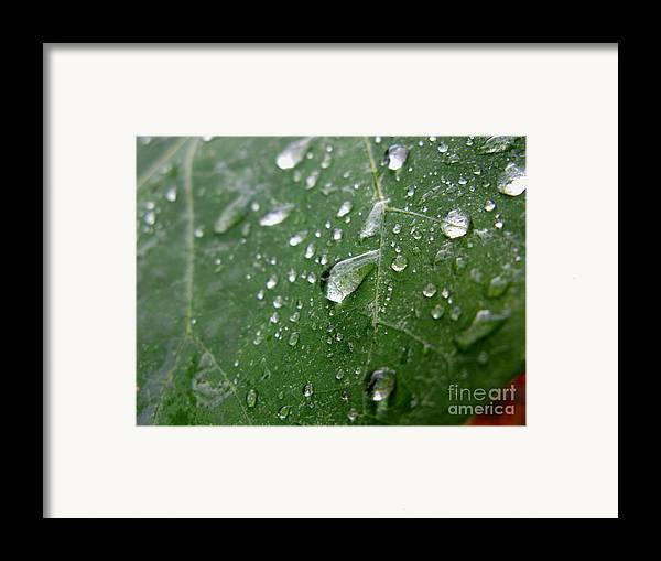 Leaf Framed Print featuring the photograph Fresh by PJ Cloud