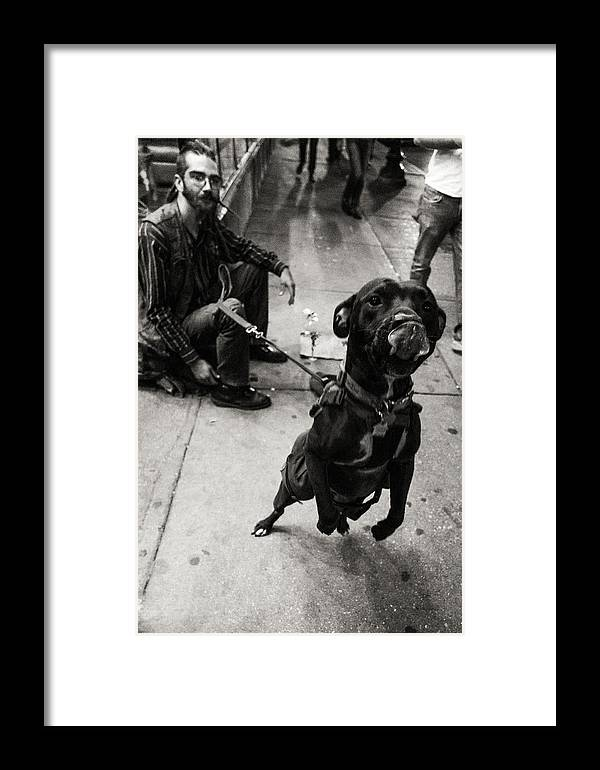 Dog Framed Print featuring the photograph Friendly Dog by Misael Nevarez