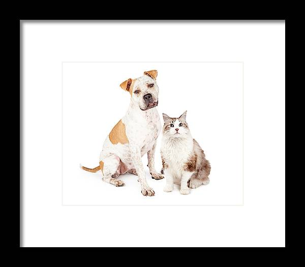 Animal Framed Print featuring the photograph Friendly Pit Bull Dog And Pretty Cat by Susan Schmitz