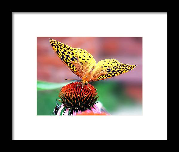 Butterfly Framed Print featuring the photograph Friends by Julie Geiss