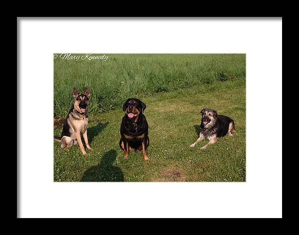 Dogs Framed Print featuring the photograph Friends by Mary Kennedy