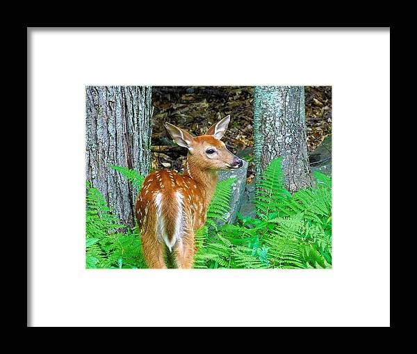 Deer Framed Print featuring the photograph Friends Of The Forest by Jerry O'Rourke