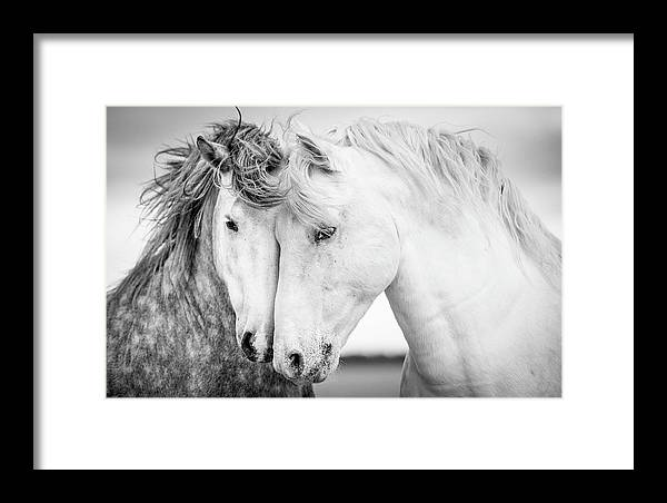 Horse Framed Print featuring the photograph Friends V by Tim Booth