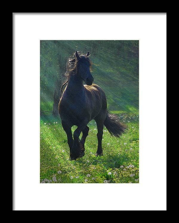 Horses Framed Print featuring the photograph Friesian Sun by Fran J Scott