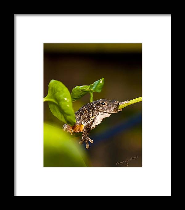 Frog Framed Print featuring the photograph Frogs Life by Terry Anderson