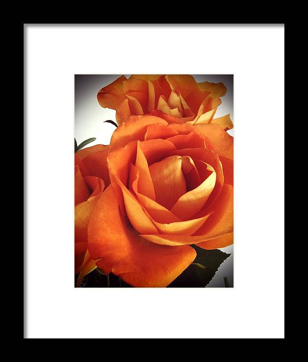 Roses Framed Print featuring the photograph From A Friend by Amy Zwick