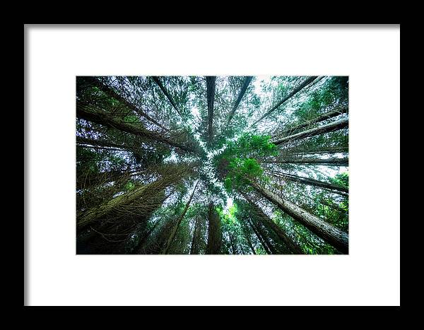 Effect Framed Print featuring the photograph From Below by Jose maria Luis marquez