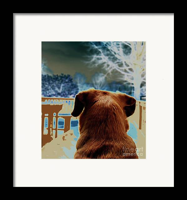 Dogs Framed Print featuring the photograph From Her Perspective  by Steven Digman