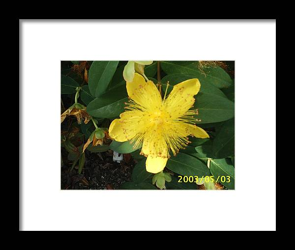 Framed Print featuring the digital art From My Garden by Barb Morton