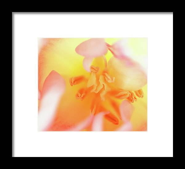 Internal Beauty Of A Tulip Framed Print featuring the photograph From The Heart by Bill Morgenstern