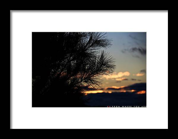 Tree Framed Print featuring the photograph From Where You Are by Jonathan Ellis Keys
