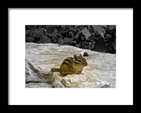 Front And Center Framed Print featuring the photograph Front And Center by Debra   Vatalaro
