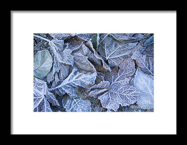 Frost Framed Print featuring the photograph Frost by Idaho Scenic Images Linda Lantzy