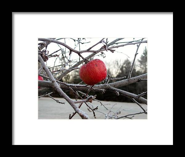 Apple Framed Print featuring the photograph Frosted Apple by Donna King