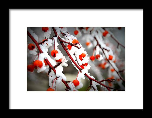 Frost Framed Print featuring the photograph Frosted Berries by Laurie Prentice