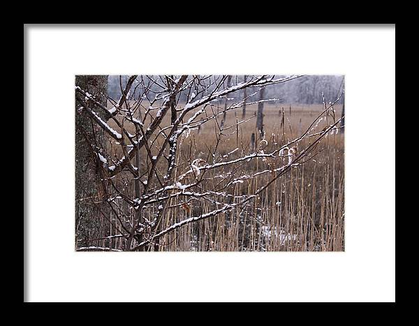 Landscape Framed Print featuring the photograph Frosted Twigs by Daniel Childs