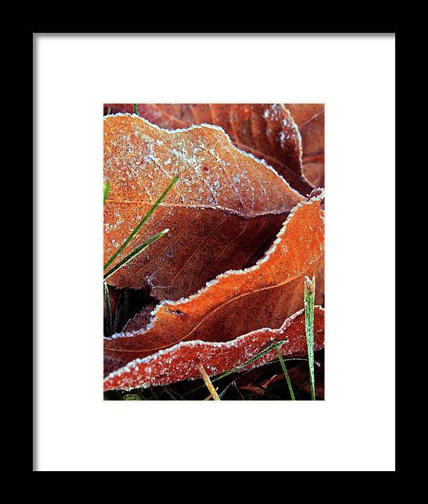 Nature Framed Print featuring the photograph Frosty Leaves by Eldon Roberts
