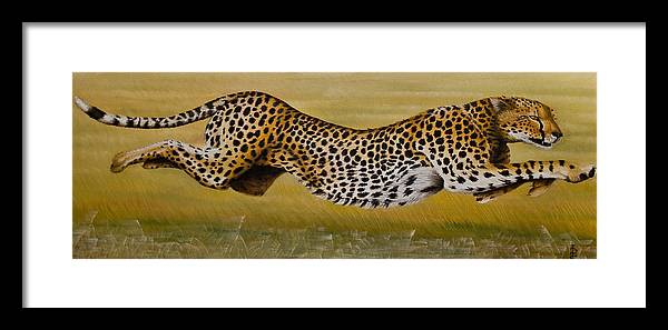 Cheetah Flying Run Speed Stretch Chase Framed Print featuring the painting Frozen At Full Charge by Pauline Sharp