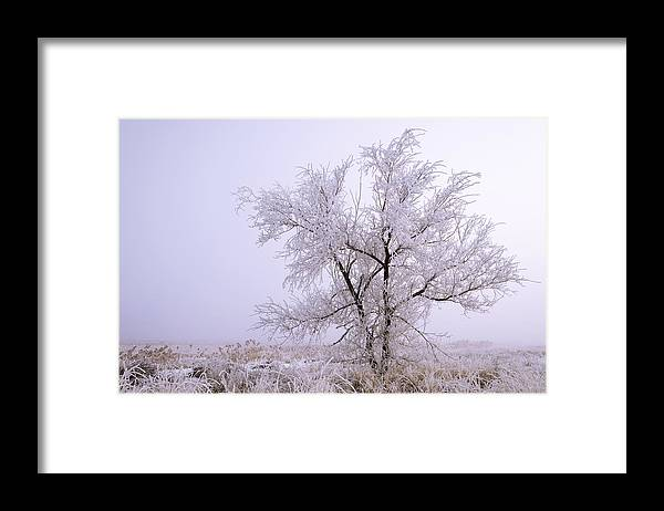 Frozen Ground Framed Print featuring the photograph Frozen Ground by Chad Dutson