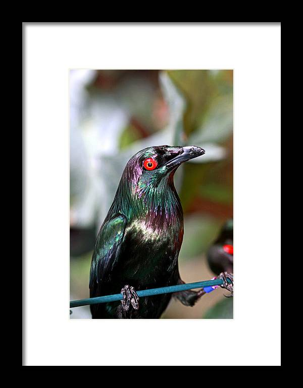 Bird Framed Print featuring the photograph Frozen by Paul Slebodnick