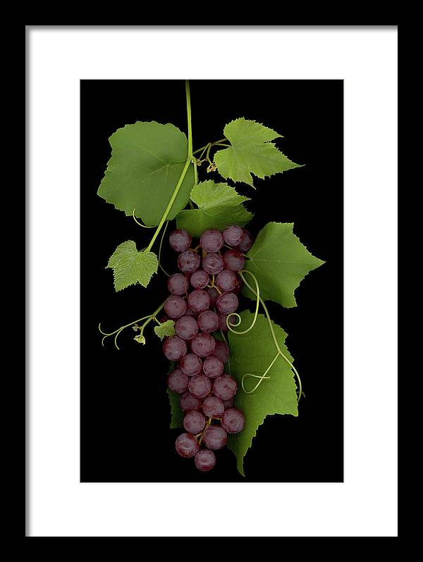 Grapes Framed Print featuring the mixed media Fruit Of The Vine by Sandi F Hutchins
