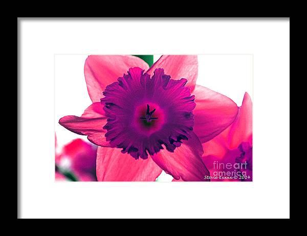 Pink Fuchsia Bloom Flower Daffodil Edit Photograph Digital Modern Edge Nature Framed Print featuring the photograph Fuchsia by Stevie Ellis