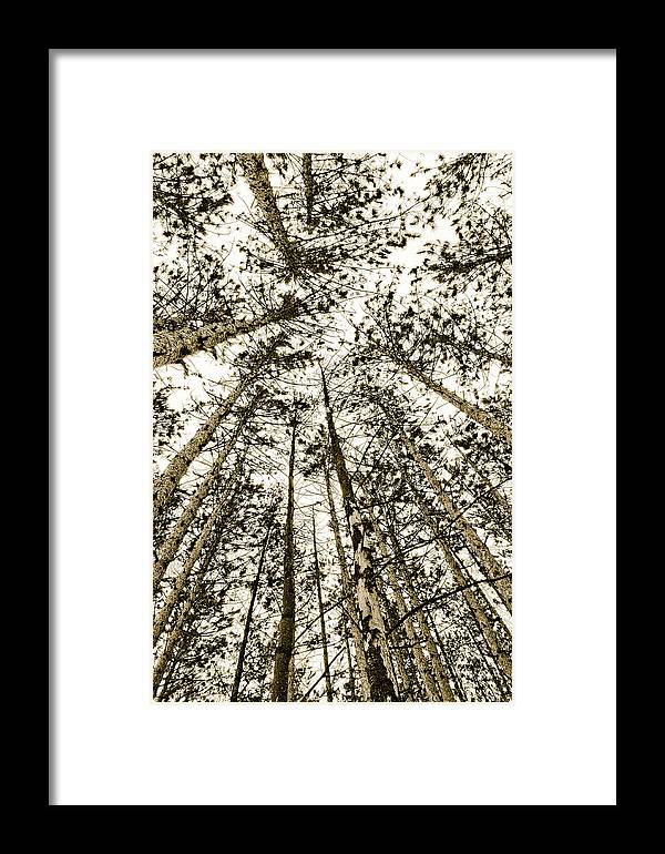 Pine Trees Framed Print featuring the photograph Fulfillment by Linda McRae