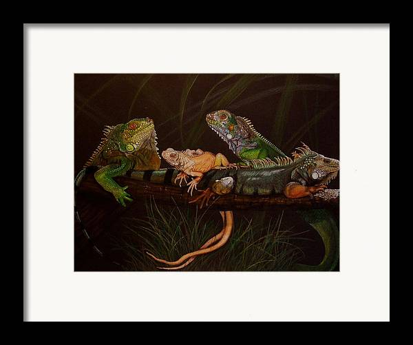 Iguana Framed Print featuring the drawing Full House by Barbara Keith