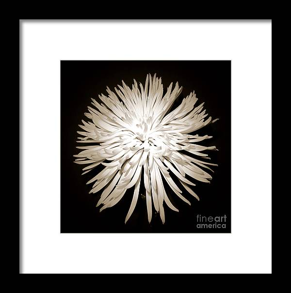Beauty Flower Framed Print featuring the photograph Full-moon by Son Of the Moon