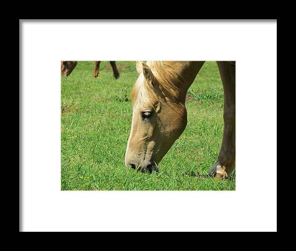 Horse Framed Print featuring the photograph Full Of Beauty by Ginger Adams