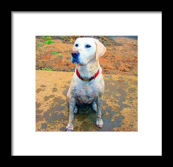 Dog Framed Print featuring the photograph Fun In The Sun by Ashley Porter