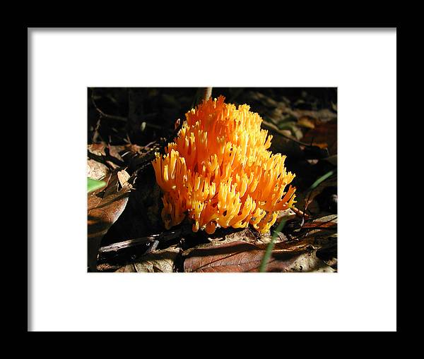 Photography Framed Print featuring the photograph Fung1 by Steven Scanlon