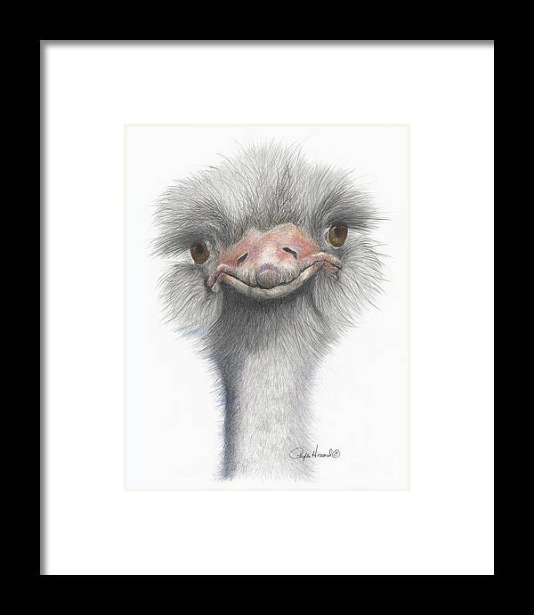 Osterich Framed Print featuring the drawing Funny Face by Phyllis Howard