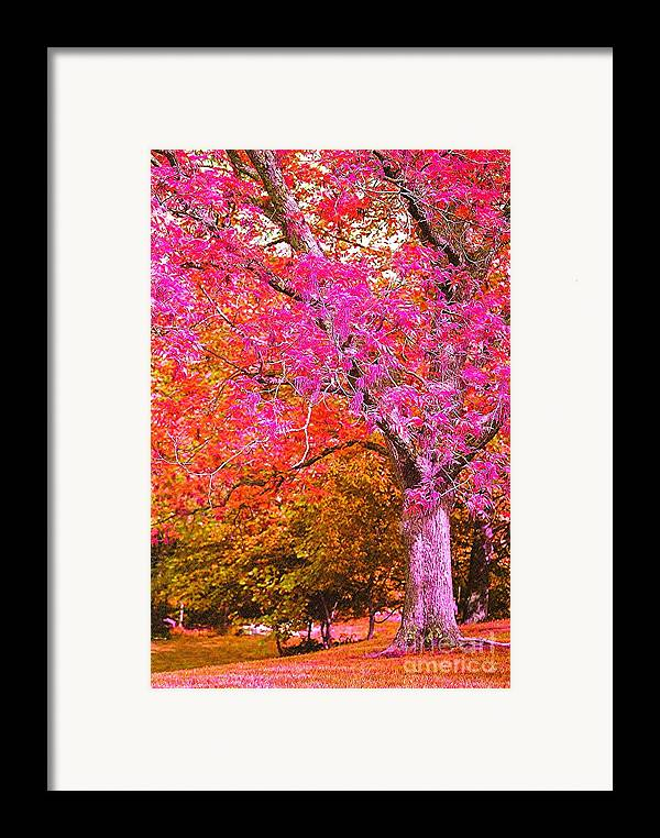 Fuschia Framed Print featuring the photograph Fuschia Tree by Nadine Rippelmeyer