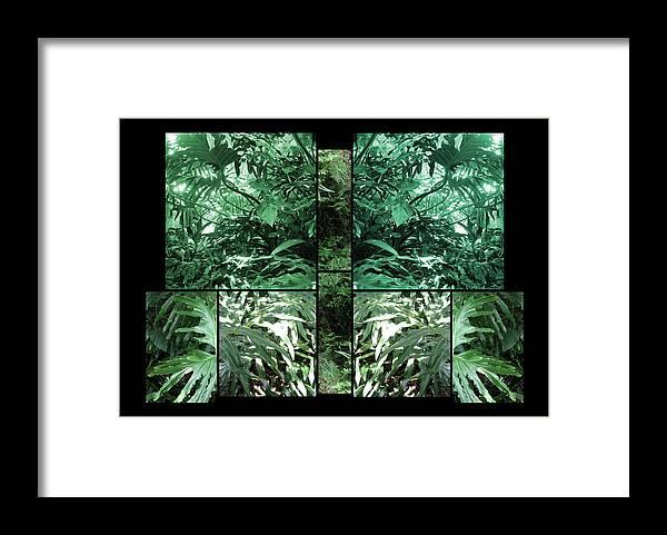 Plant. Garden Framed Print featuring the photograph Garden by Daniel Schubarth