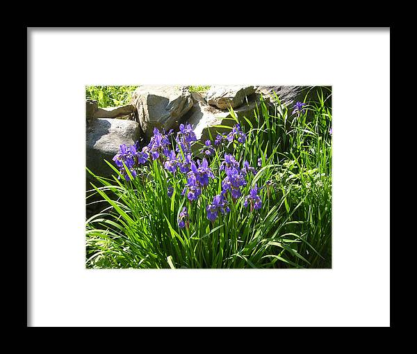 Flowers Framed Print featuring the photograph Garden Elegance by Peter Williams
