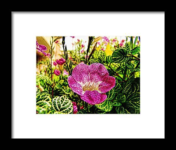Garden Framed Print featuring the photograph Garden Flower by Galeria Trompiz