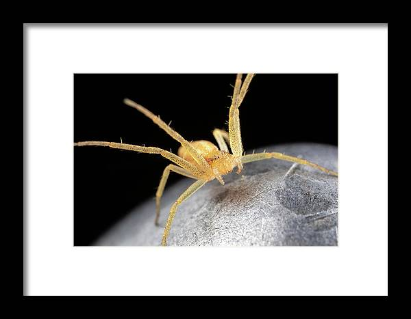 Macro Spider Garden Guard Fence Post Extreme Closeup Close Up Close-up Ma Mass Massachusetts Insect Brian Hale Brianhalephoto Eyes U.s.a. Usa Newengland New England Framed Print featuring the photograph Garden Guard by Brian Hale