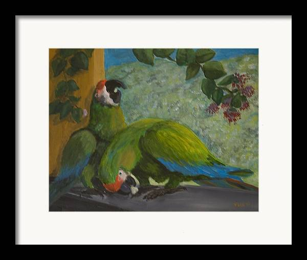 Birds Framed Print featuring the painting Garden Parrots by Anita Wann