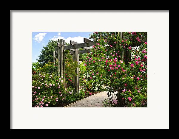 Garden Framed Print featuring the photograph Garden With Roses by Elena Elisseeva