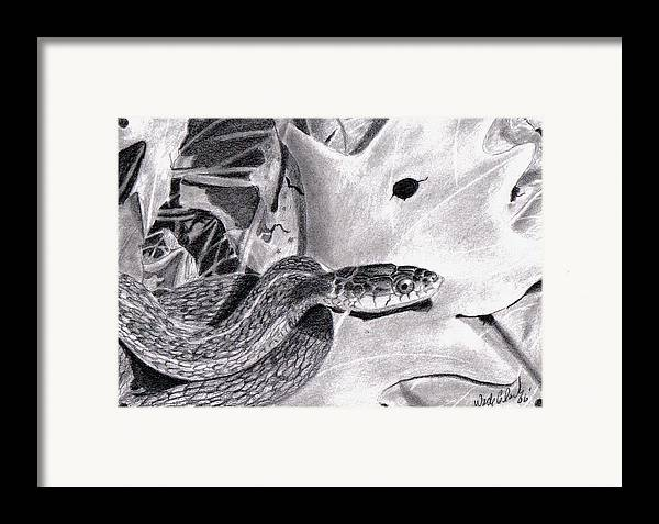 Animals Framed Print featuring the drawing Garter Snake by Wade Clark